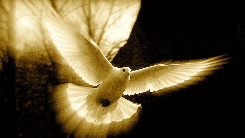 Los 9 Frutos Del Espíritu Santo ¿Que Son Y Que