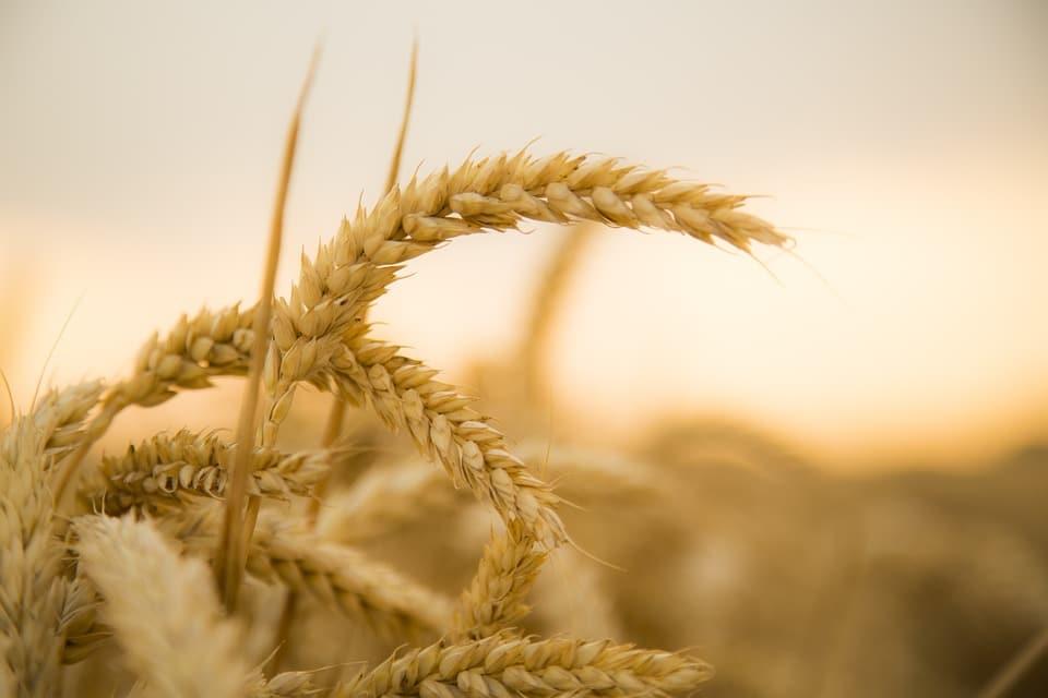 Parábola del sembrador
