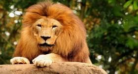León de la tribu de Judá