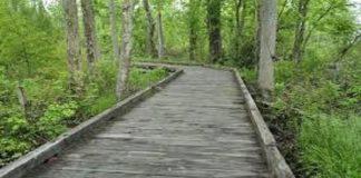 el camino, la verdad y la vida