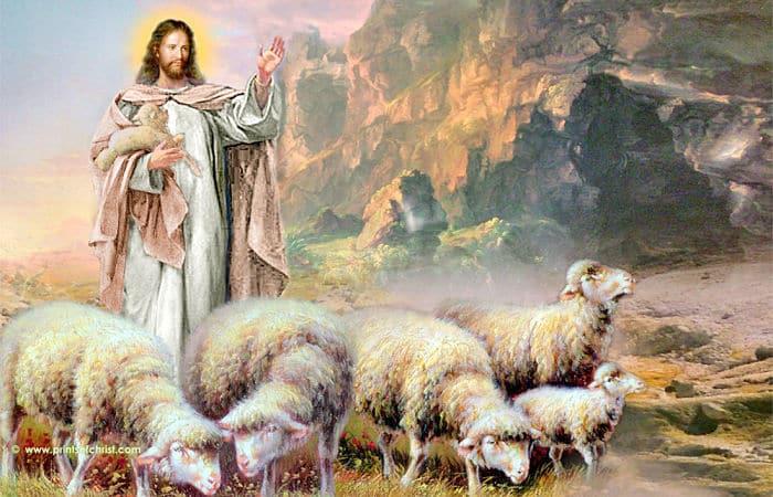 Yo soy el buen pastor el ama a las ovejas