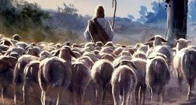 Mis ovejas oyen mi voz