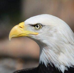 La Reflexión del Águila y el Hombre